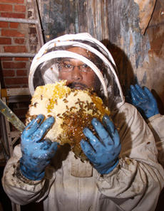 """<div class=""""source"""">Jeff Moreland</div><div class=""""image-desc"""">Taishaun Johnson, a Lebanon beekeeper, collected bees from a hive in the upstairs portion of Springfield's US Bank location Thursday. More than 100,000 bees were in the building, according to Johnson.</div><div class=""""buy-pic""""><a href=""""/photo_select/3558"""">Buy this photo</a></div>"""