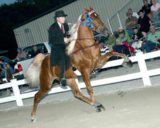 """<div class=""""source"""">submitted</div><div class=""""image-desc"""">Walk Time Charlie, ridden by Rocky McCoy, was one of the big winners for Rolling Hills Farm and Stables of Springfield at the 43rd Annual Kentucky Celebration last month in Liberty.</div><div class=""""buy-pic""""><a href=""""http://web2.lcni5.com/cgi-bin/c2newbuyphoto.cgi?pub=023&orig=web_horse.jpg"""" target=""""_new"""">Buy this photo</a></div>"""